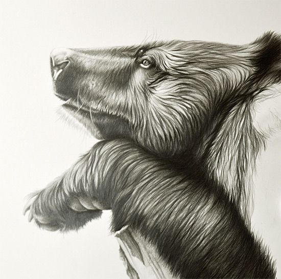 Developing A Focal Point How To Artists Illustrators - Stunning drawings of endangered wild animals by richard symonds