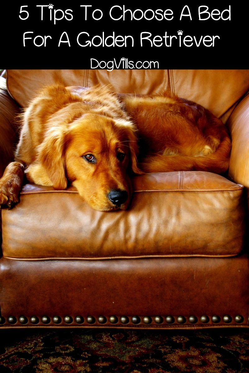 Top 5 Best Dog Beds For Golden Retrievers With Reviews Dog