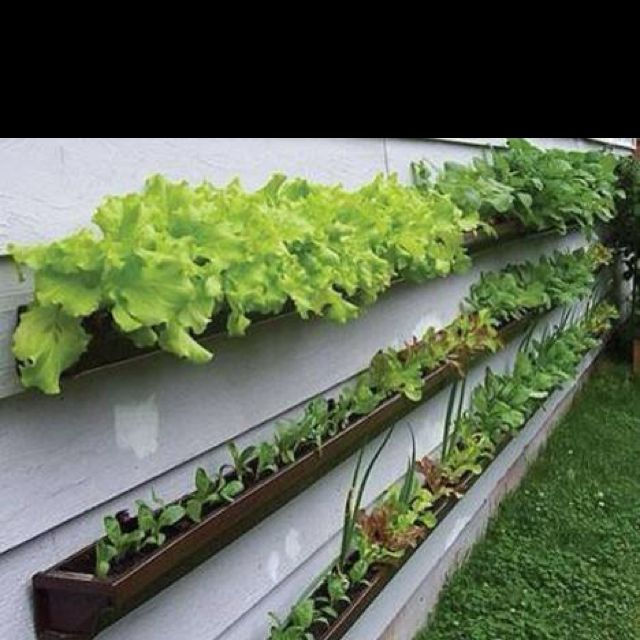 Nifty use of rain gutters.