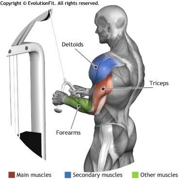 tricep pushdowns machine