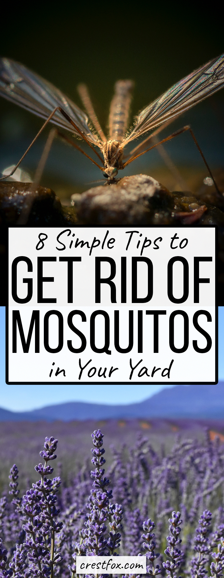 How to Get Rid of Mosquitoes in Your Yard - 8 Tips ...