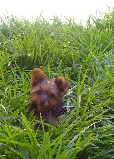 My little dog Mila =) // lost in the jungle.. of your backyard! jajajaj