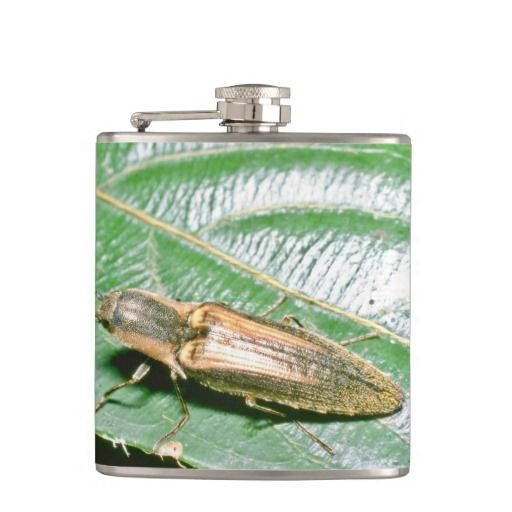 >>>best recommended          	Click Beetle Flask           	Click Beetle Flask Yes I can say you are on right site we just collected best shopping store that haveDiscount Deals          	Click Beetle Flask Here a great deal...Cleck link More >>> http://www.zazzle.com/click_beetle_flask-256132659370375500?rf=238627982471231924&zbar=1&tc=terrest