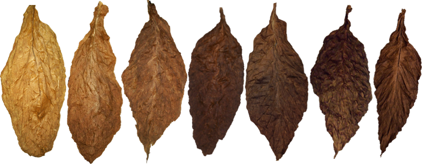 Different Types Of Tobacco Leaves Tobacco Leaf Cigars Pipes And Cigars