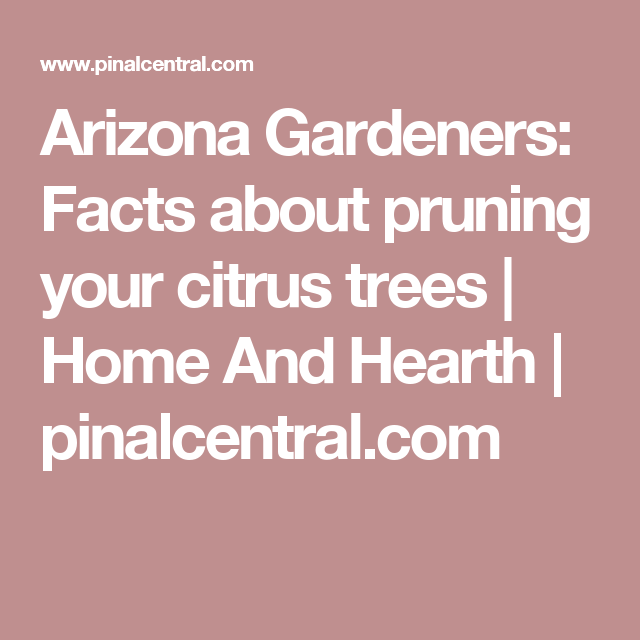 Arizona Gardeners: Facts about pruning your citrus trees | Home And Hearth | pinalcentral.com