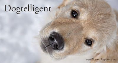Dogtelligent