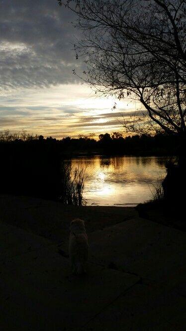 Genie's watching the sunset.