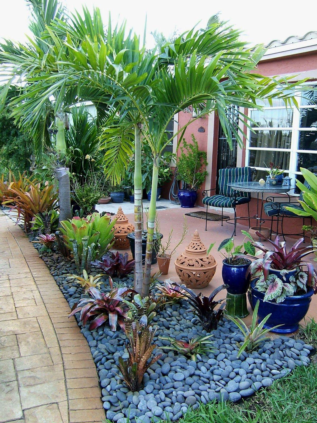 bromeliads in garden amenagement