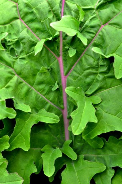 Kale jardinerieducanton.com