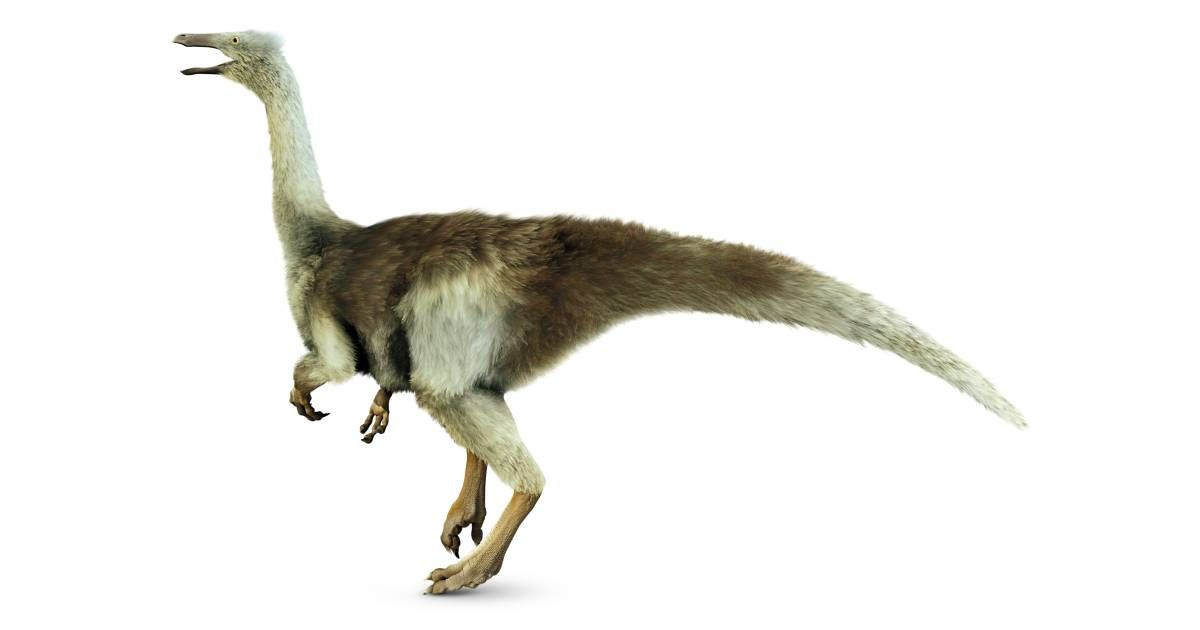 Gallimimus (With images) Ancient animals, Prehistoric