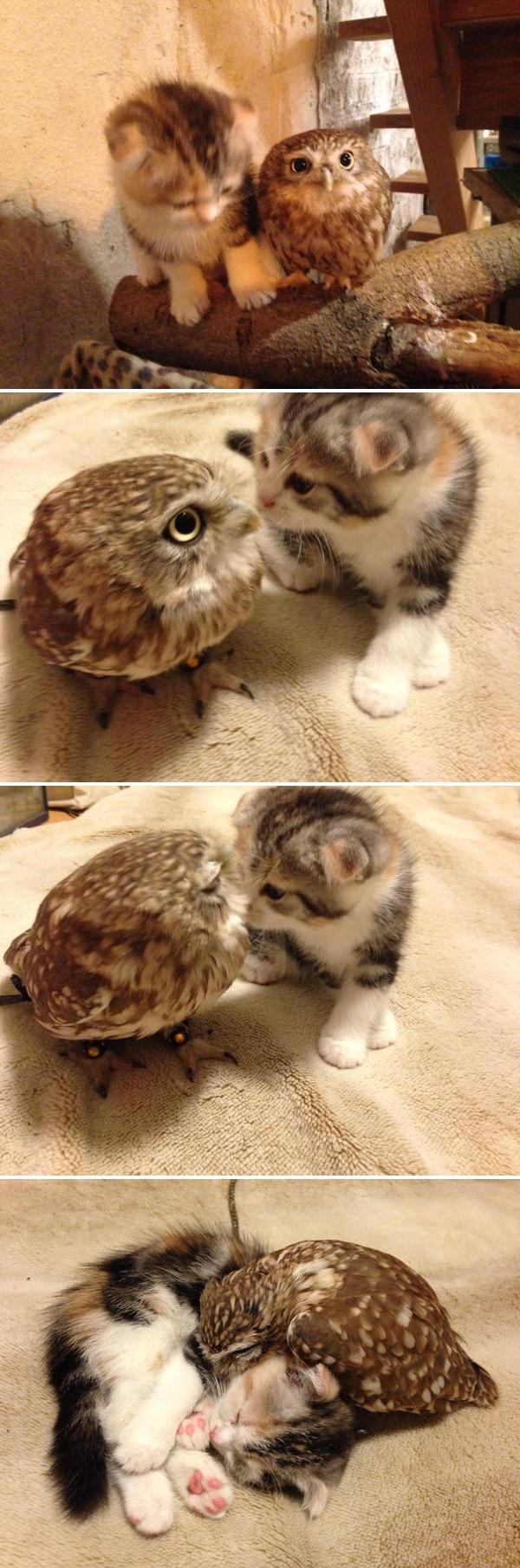 새끼 고양이와 올빼미.jpg