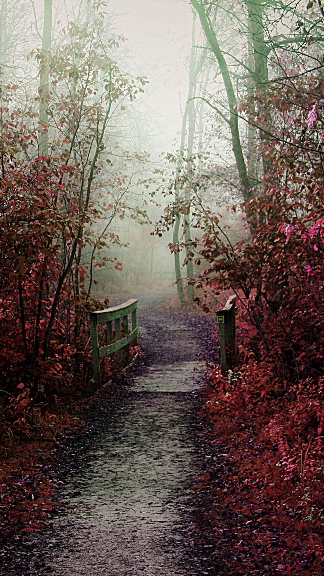 Nature iPhone 6 Plus Wallpapers Misty Autumn Path iPhone