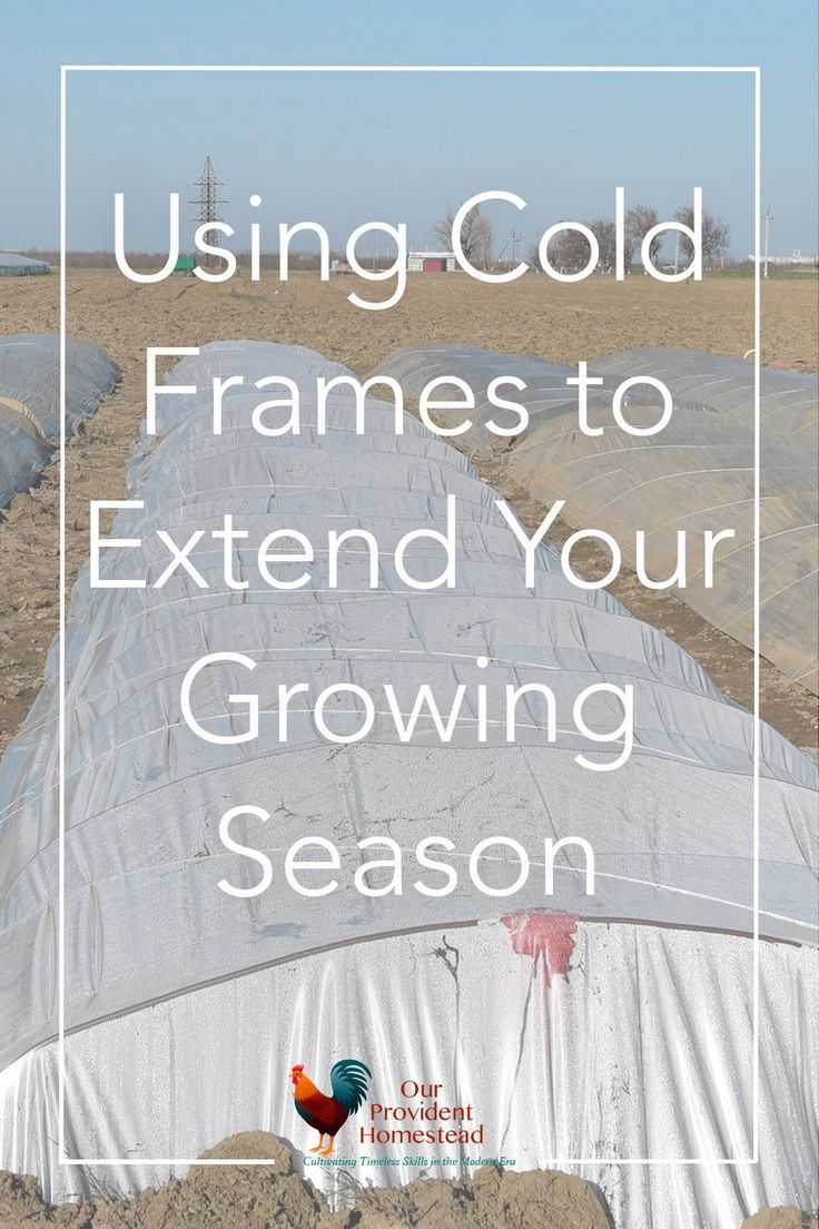 Using Cold Frames to Extend Your Growing Season   Cold frame ...