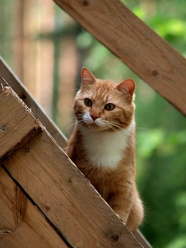 Free Daily Desktop Android Iphone Wallpaper By Webshots Cats And Kittens Orange Tabby Cats Orange Cats