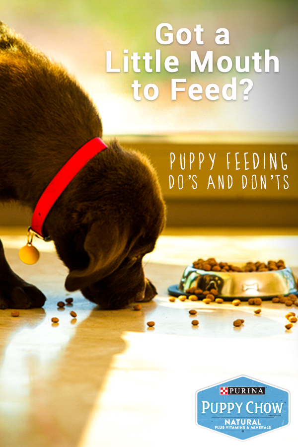 One of the most important parts of a puppy's life is food. That's because what, how much, and when he eats all play a part in his health. Learn all the do's and don'ts of feeding your new puppy by visiting this link, and find out how to take care of him just as much as he takes care of you.