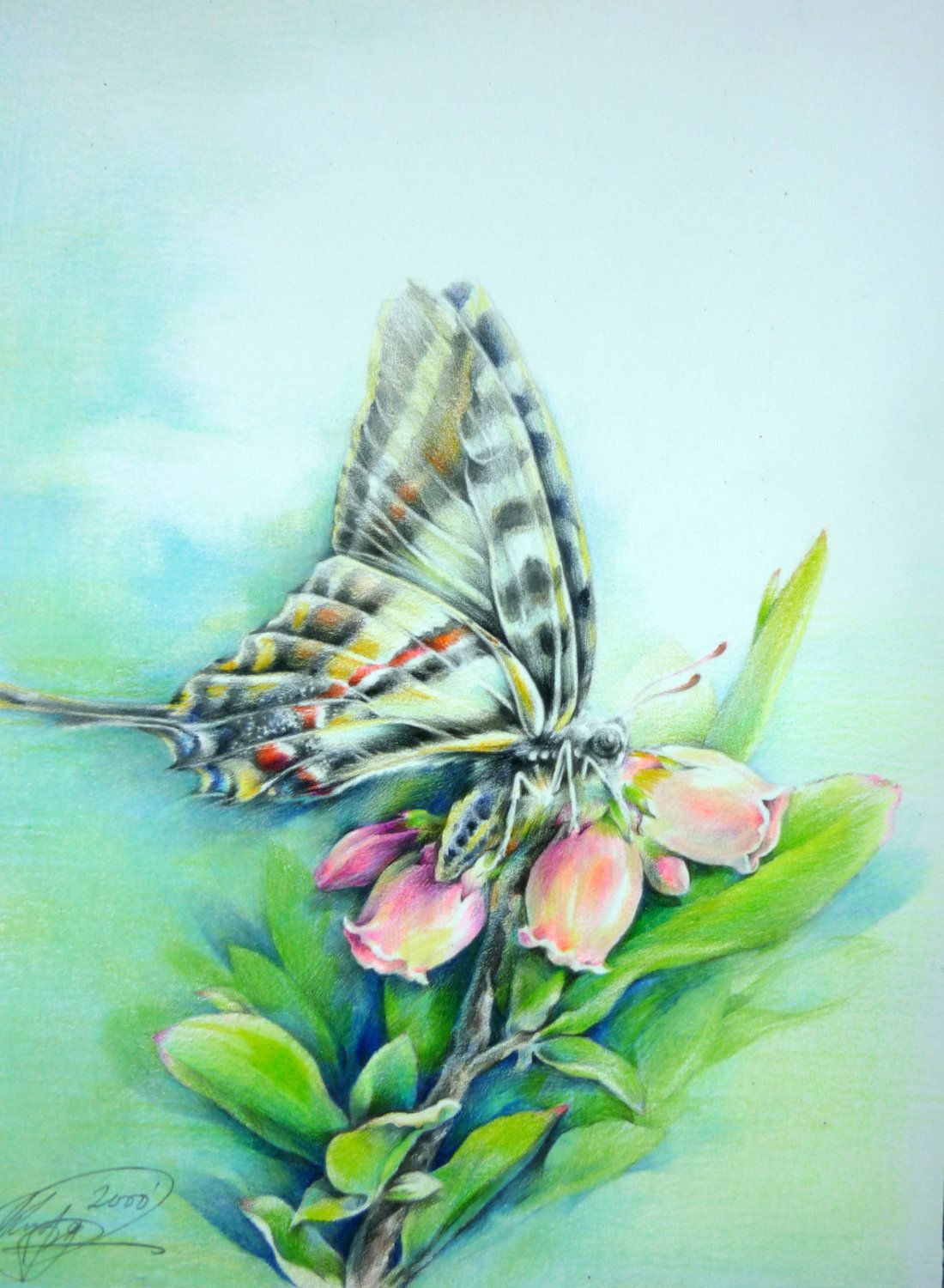Color pencil drawings of Butterfly Color pencil