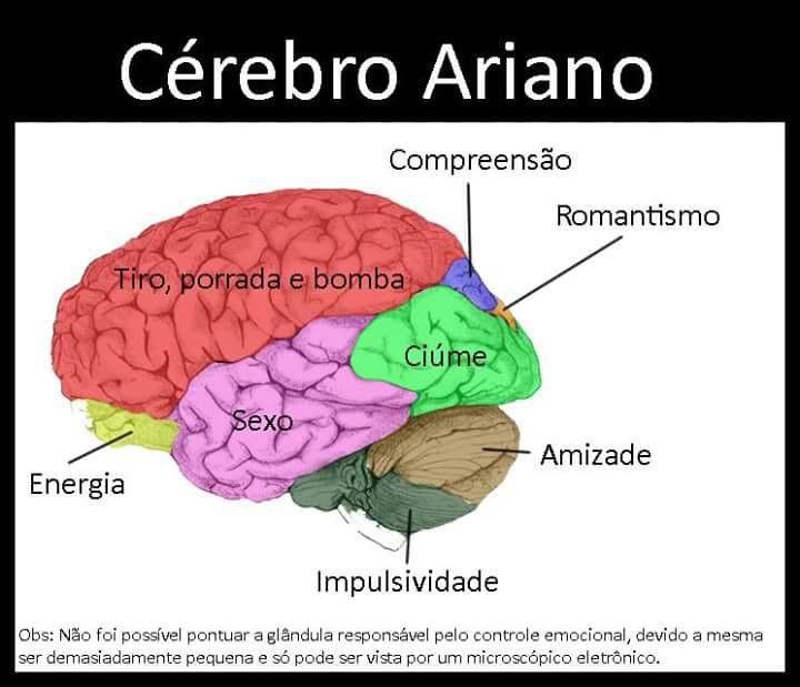 O Cérebro Ariano