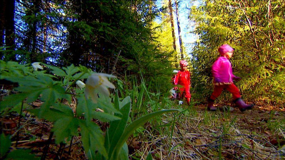 Esikoulunkäynti metsässä on kasvattanut suosiotaan Suomessa ja herättää ihastusta myös maailmalla. Kymmenessä vuodessa metsäeskareita on perustettu Suomessa jo noin 30. Uusimmat metsässä toimivat varhaiskasvatusryhmät on perustettu Keski-Suomessa Petäjävedellä ja Suolahdessa.