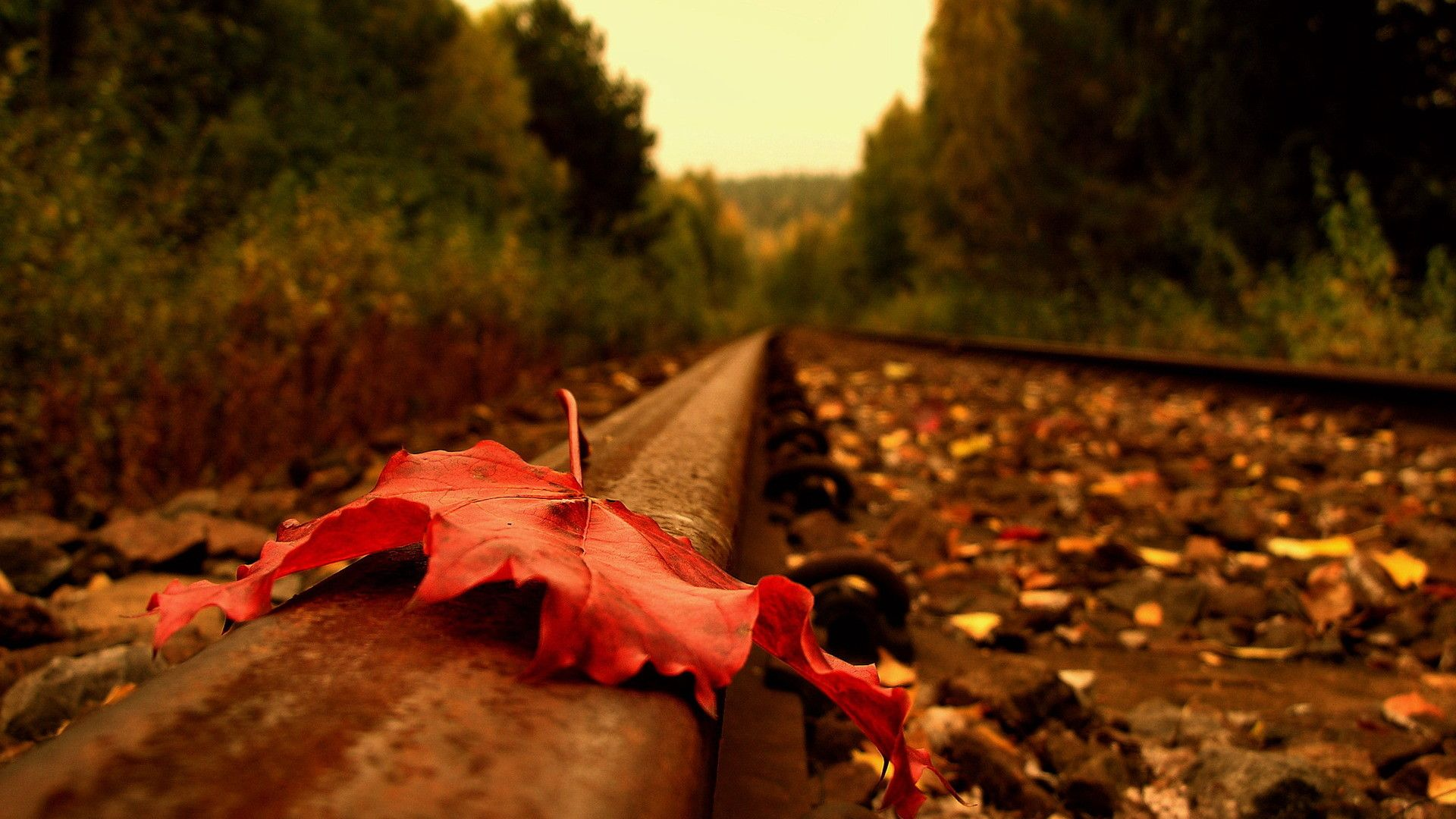 Red Autumn Leaf On The Railroad Beautiful Macro Wallpapers Hd Wallpaper Download For Ipa In 2020 Autumn Leaves Wallpaper Autumn Leaves Photography Leaf Photography