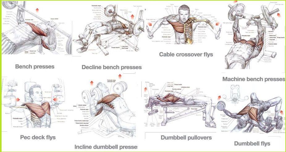 Best Chest Exercises for Mass | chest | Pinterest | Best chest ...