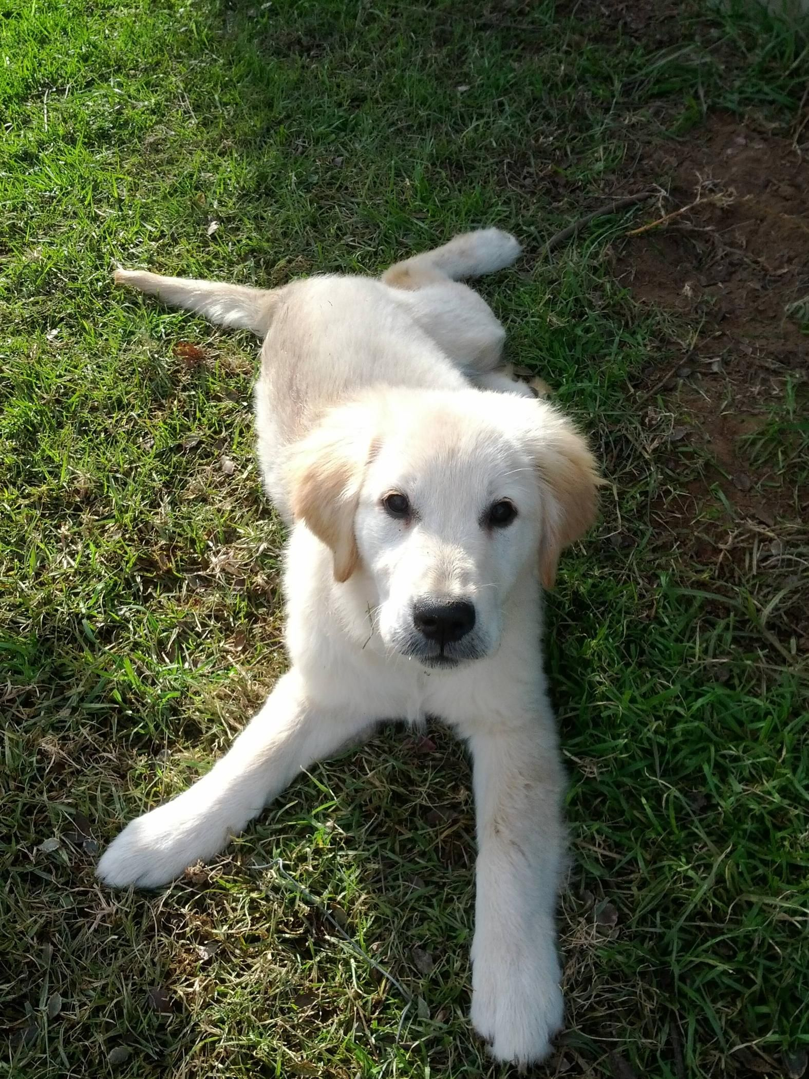 My Manny At 4 Months Cute Animals Dogs Puppies Pets