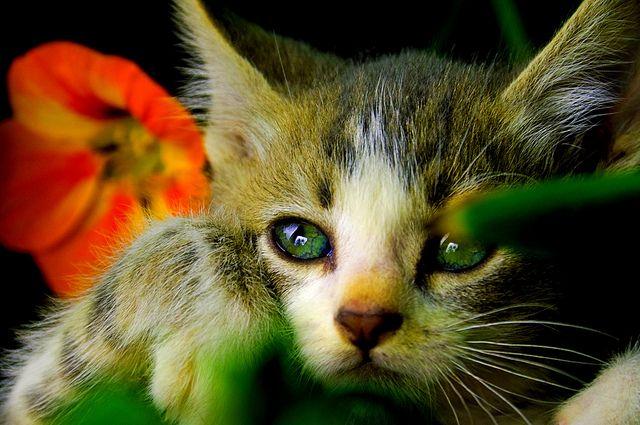 Kitty posing, via Flickr.