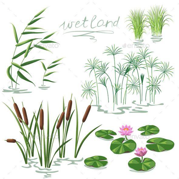 Wetland Plants Set (Vector EPS, CS5, algae, aquatic, bog, botany ...