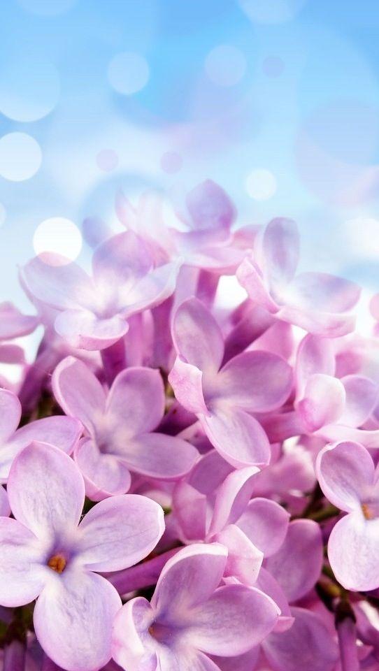 The Iphone 5 Wallpaper I Just Pinned Blumentapete Lila Bluten Blumen Hintergrunde