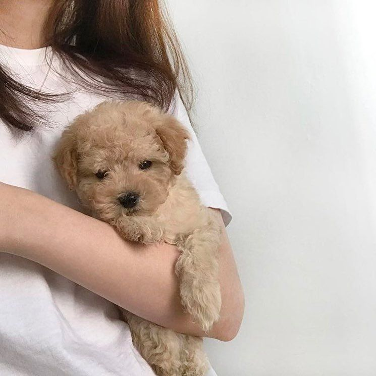 Uhmgrce Dogs Dogs Aesthetic Dogs And Puppies Dogs Quotes Uhmgrce In 2020 Cute Baby Animals Cute Dogs Cute Animals