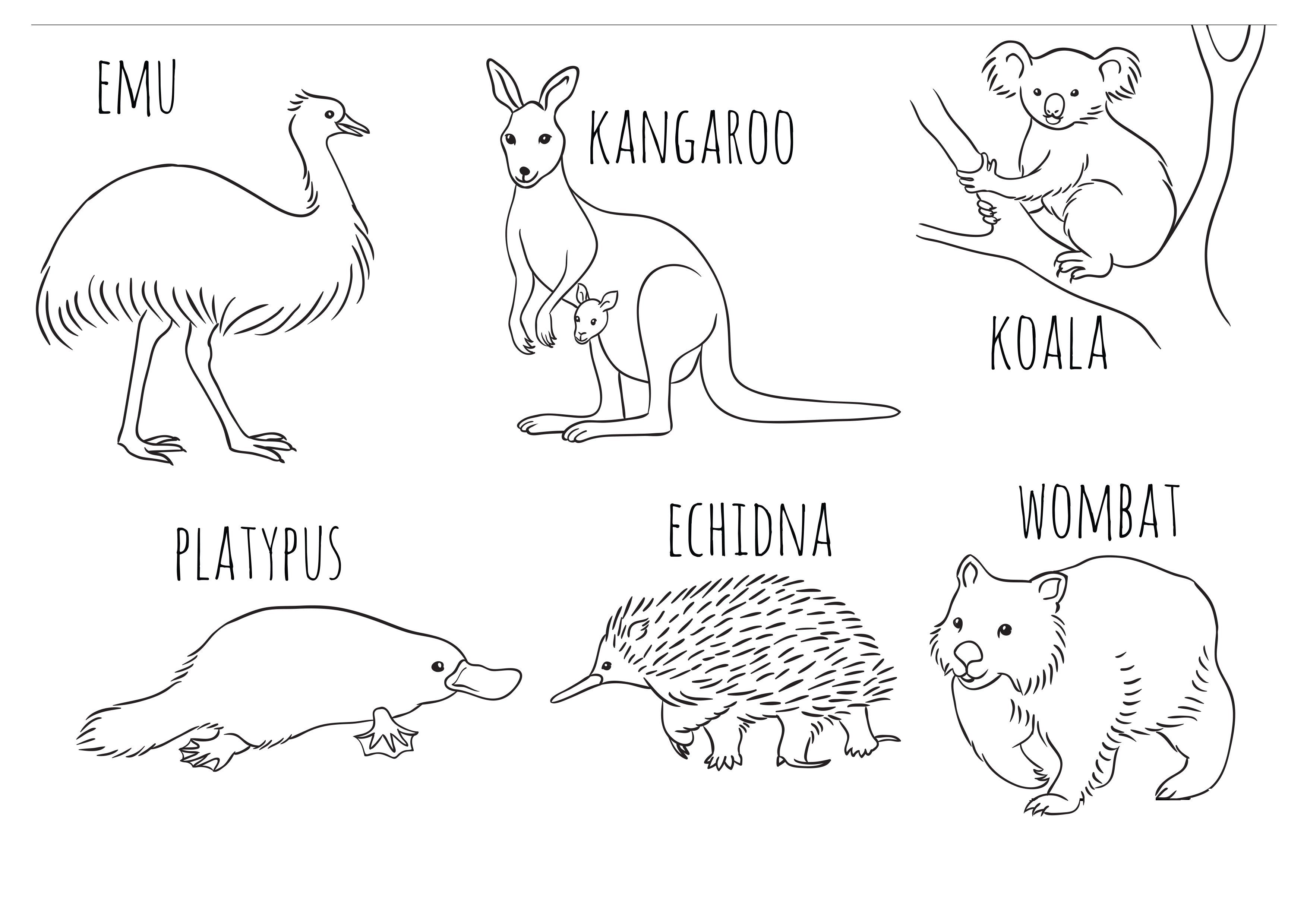 Colouring Pages For Kids Australian Animals Display