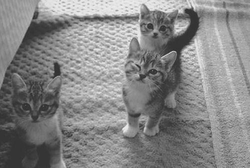 I <3 kittays
