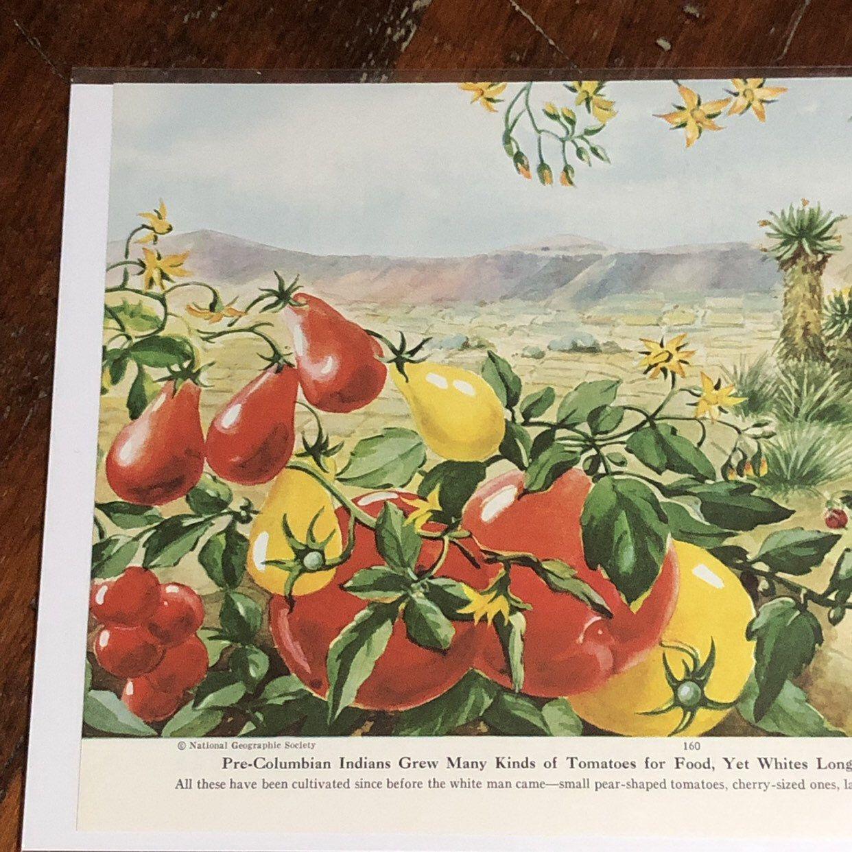 bd1dc97189252 COLORFUL VEGETABLE Prints, Vintage Ephemera, 1935 National ...