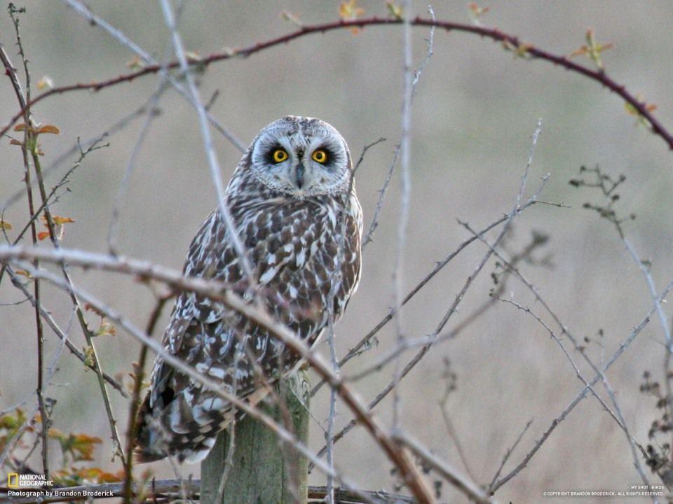 Удивительные птицы по версии National Geographic 2010 ...