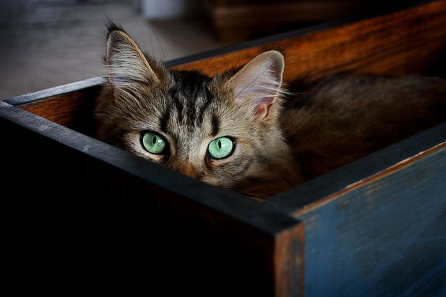 A Quiet Place Cat Cats Crazy Cats Cats Meow