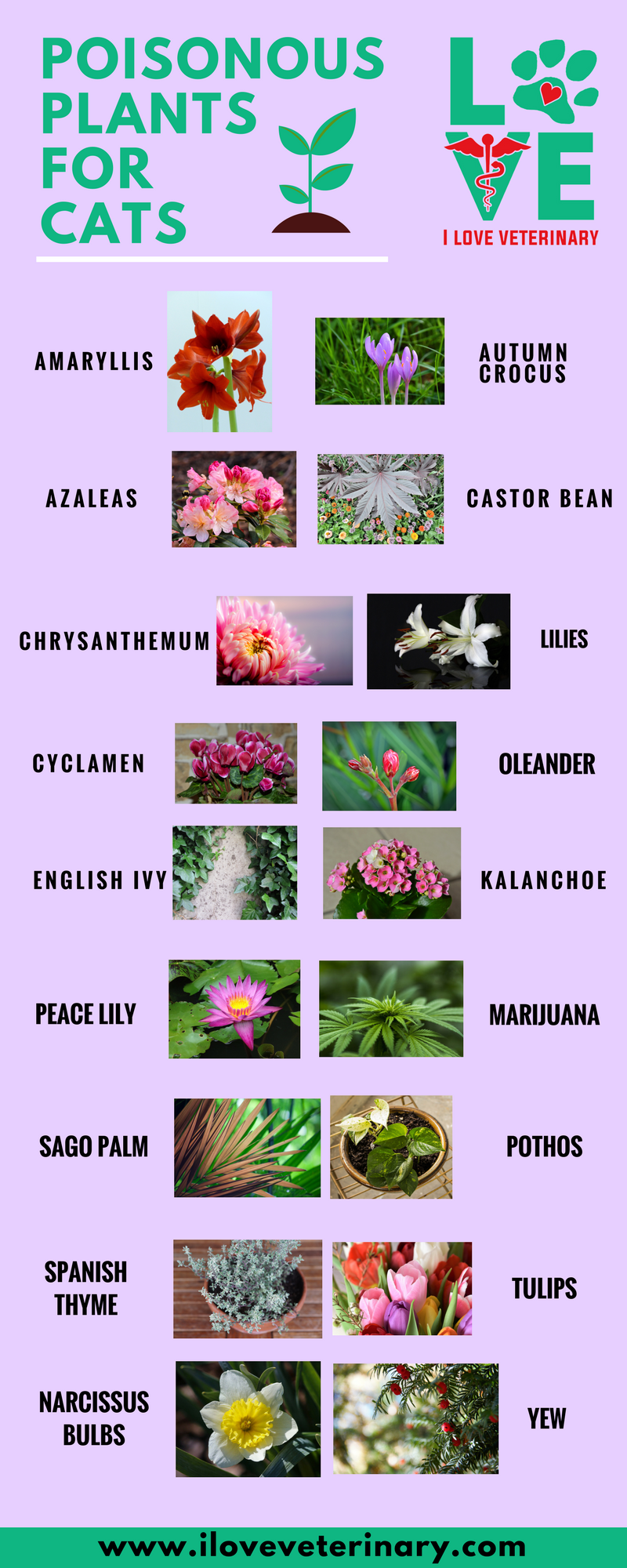 Poisonous Plants For Cats Infographic Poisonous Plants Cat Plants Best Indoor Plants