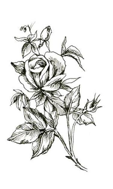 15 Black And White Floral Tattoo Designs Floral Tattoo Design Rose Tattoo Design Rose Tattoo Stencil