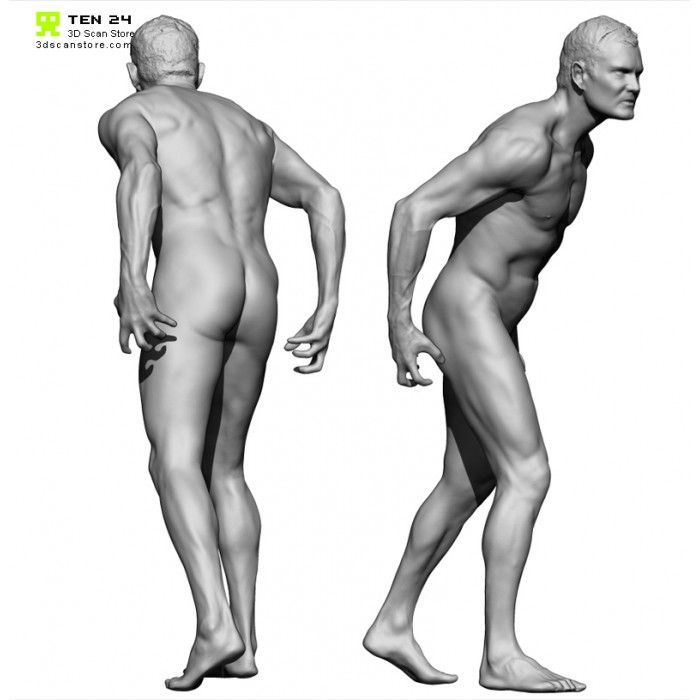 Colour Male 04 Anatomy Bundle Anatomy Human Poses Anatomy Reference