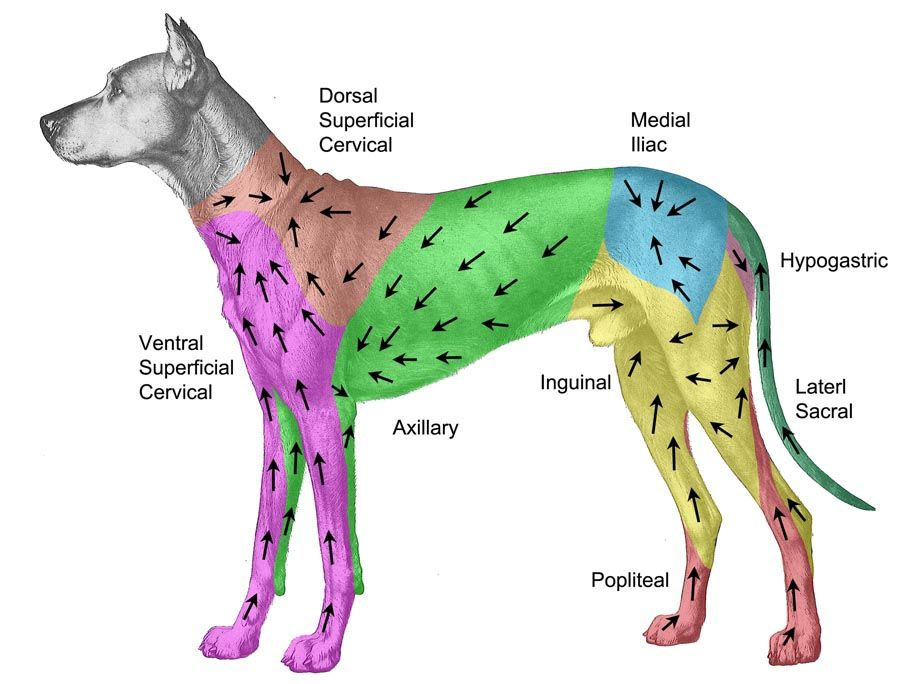 where are the glands in a dog located | Back to Annual Meeting ...