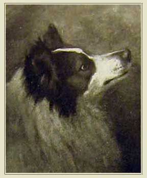 Right One Of Queen Victoria S Rough Collies Oscar From A