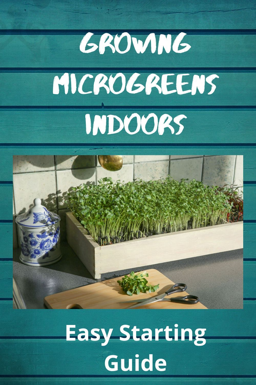 Growing Microgreens Indoors