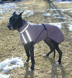 Alpenhitze Custom Dog Coats Dog Coats Great Dane Dogs Dane Dog