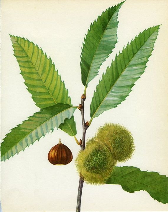 Pin on botanical illustration