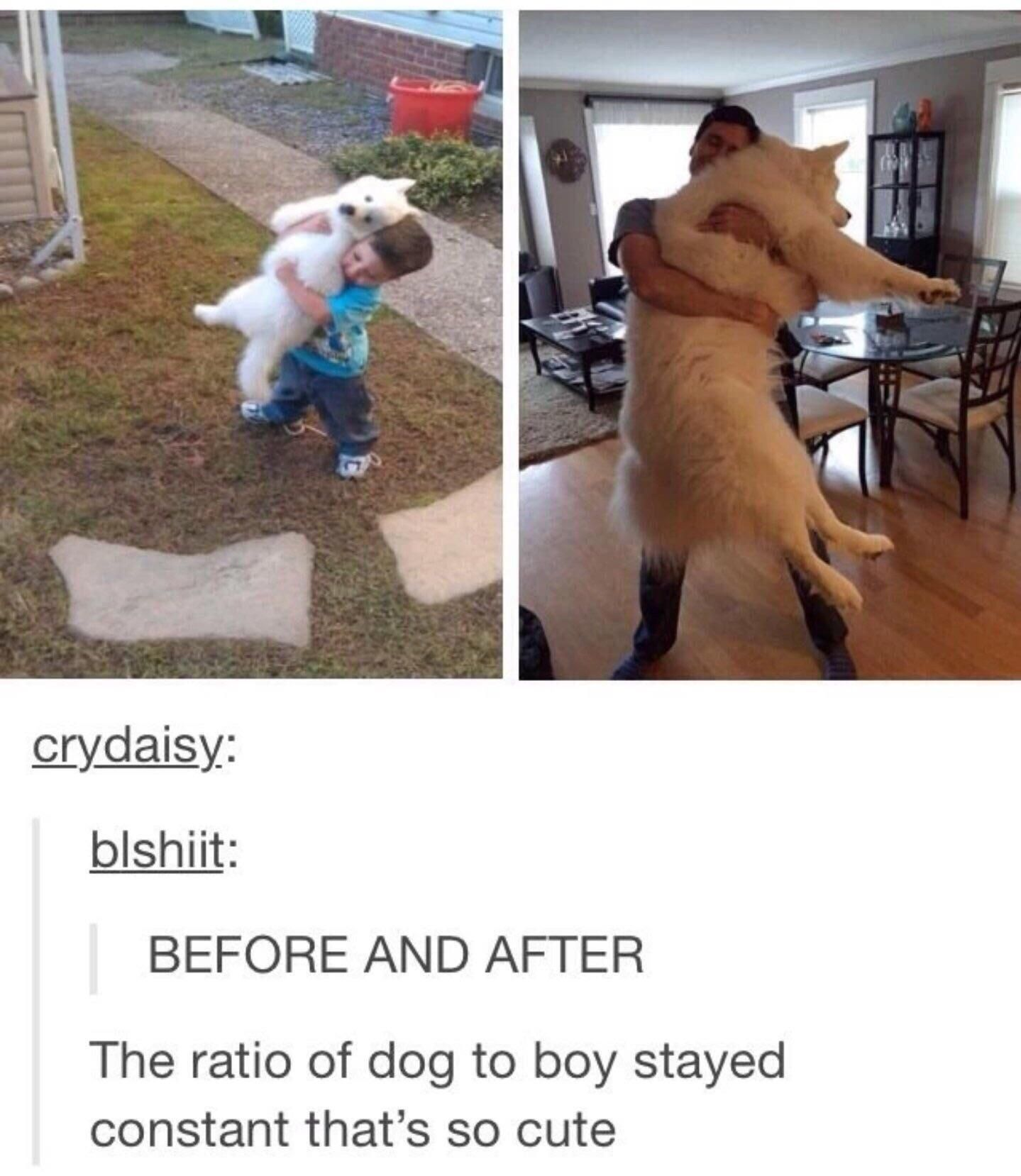 Dog To Boy Ratio Stays The Same With Images Cute Funny Animals