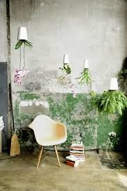 boskke hanging plants//