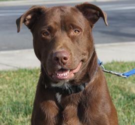 Adopt Reece On Petfinder Labrador Retriever Labrador Labrador Retriever Training