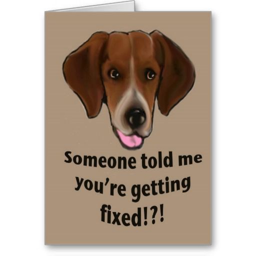 Personalized Funny Funny Get Well Card For Dogs Greeting Cards