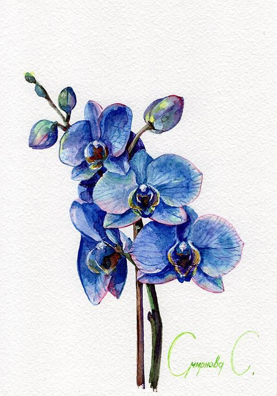 Orchid Flowers Purple Blue Pink Green Yellow Watercolor Original Painting From The Artist Svetlana Smirnova Orchid Drawing Blue Orchid Tattoo Watercolor Flowers
