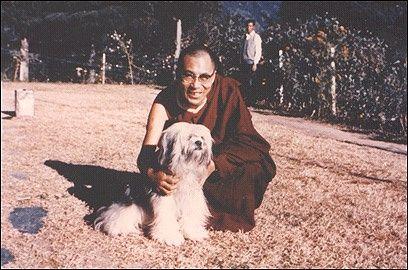 Lhasa Apso & Dalai Lama