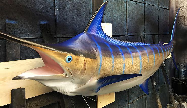 Gray Taxidermy Blue Marlin Fish Replica In 2020 Blue Marlin Fish Blue Marlin Marlin