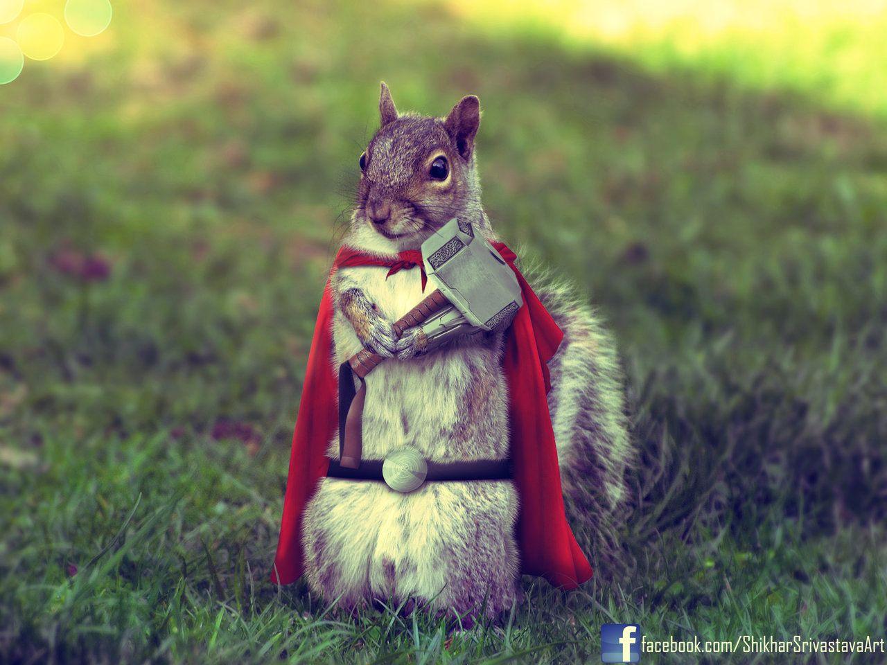 Thor Squirrel By Shikharsrivastavaiantart, But I